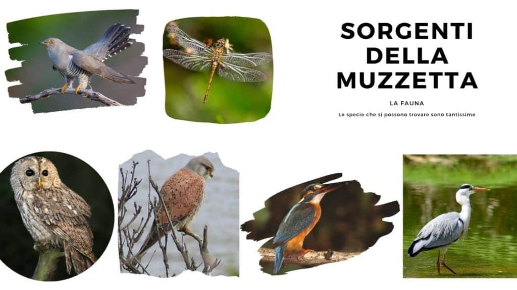 Alcuni tipi di Fauna che si trovano alle Sorgenti della Muzzetta